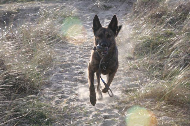 Lara run 2