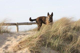 Lara dunes